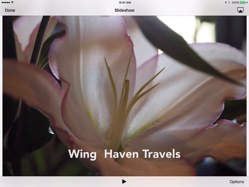 Wing Haven Travels-HD