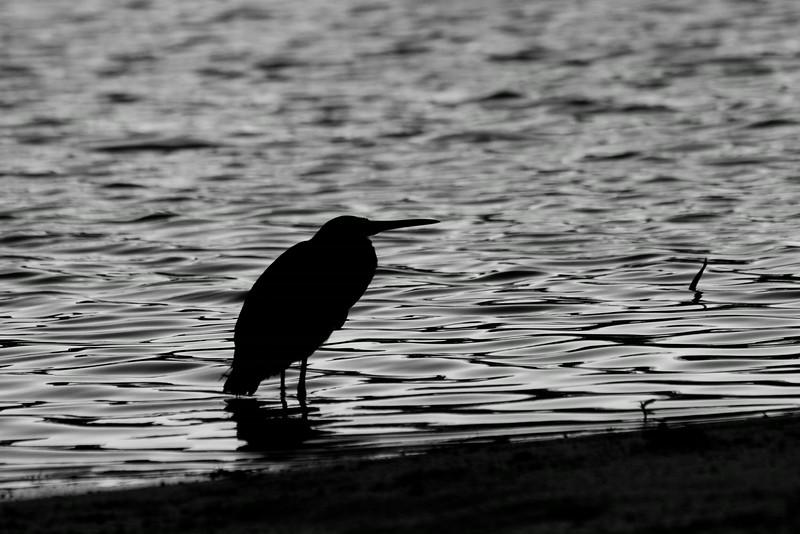 Heron Shore