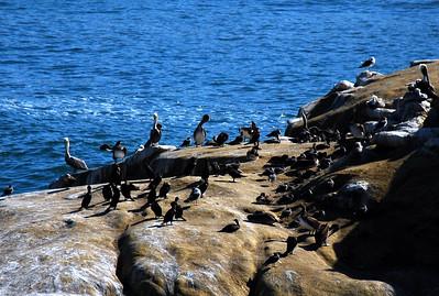 Pelican Conclave