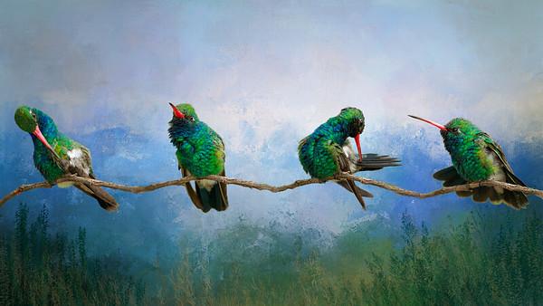 Broad-billed Hummingbird - Wings in Time