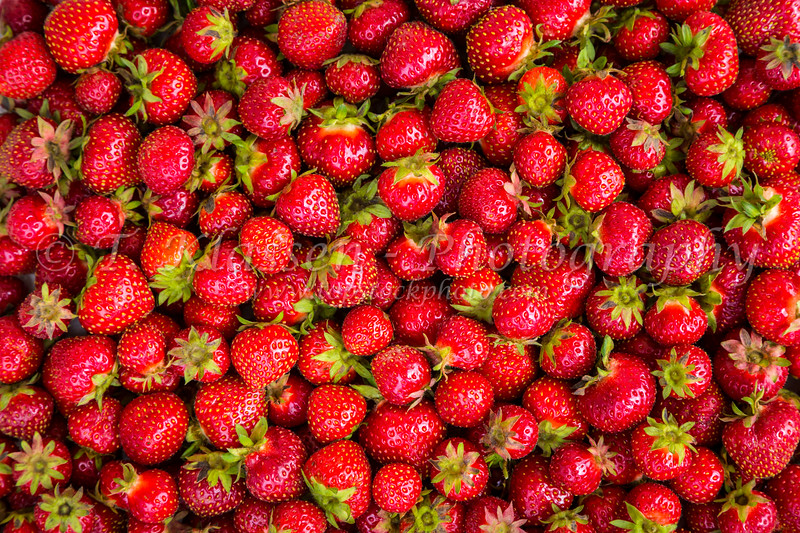 Closeup of freshly picked strawberries at Winkler, Manitoba, Canada.