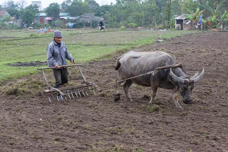 Vietnamese farmer