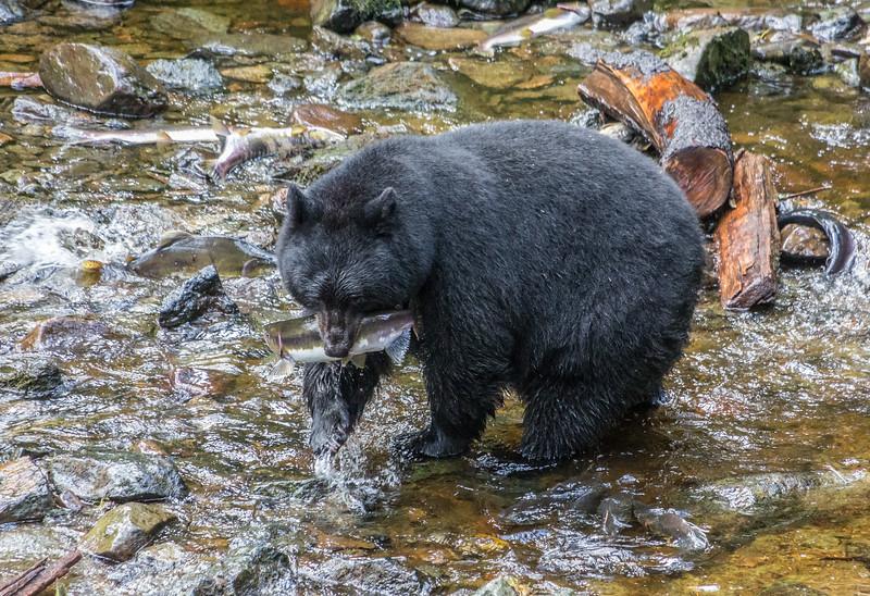 Fishing for Salmon