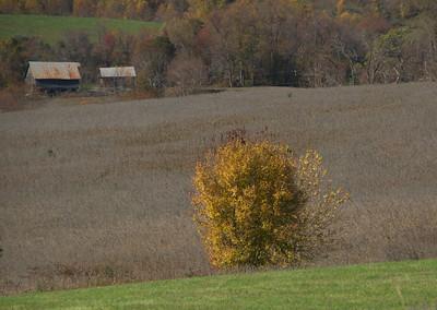 Three fields 7