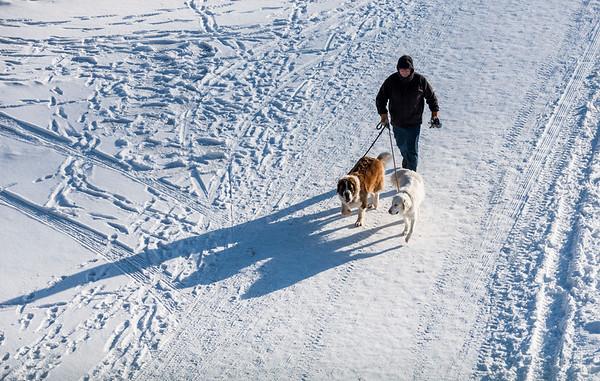 DAVID LIPNOWSKI / WINNIPEG FREE PRESS  A man walks his dogs on the Assiniboine River at The Forks Sunday January 28, 2018.