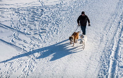 DAVID LIPNOWSKI / WINNIPEG FREE PRESS  A man walks his dogs on the Assiniboine River at The Forks Sunday January 28, 2018.