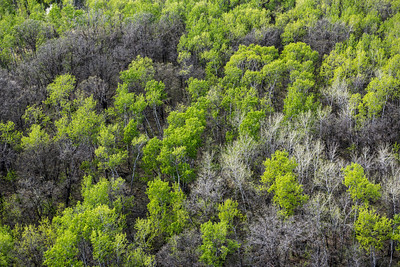 DAVID LIPNOWSKI / WINNIPEG FREE PRESS  Spring Trees  Aerial photography over Winnipeg May 18, 2016 shot from STARS helicopter.
