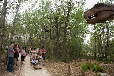 DAVID LIPNOWSKI / WINNIPEG FREE PRESS  Visitors check out the Tyrannosaurus Rex at the Dinosaurs Alive! exhibit at the Assiniboine Park Zoo Sunday May 22, 2016.