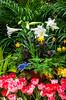 Spring garden flower arrangements in the Assiniboine Park Conservatory in Winnipeg, Manitoba, Canada.