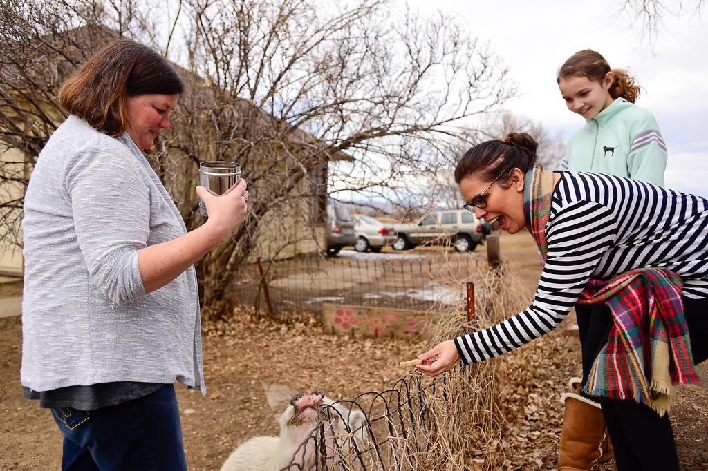 . Liz Hicks and her daughter Sedona Hicks, both of Fort Collins, visit with Winston, a 7-year-old Vietnamese pot-bellied pig, as his owner Elizabeth Wright looks on at her home in Niwot, Colorado on Jan. 30, 2018. (Photo by Matthew Jonas/Staff Photographer)