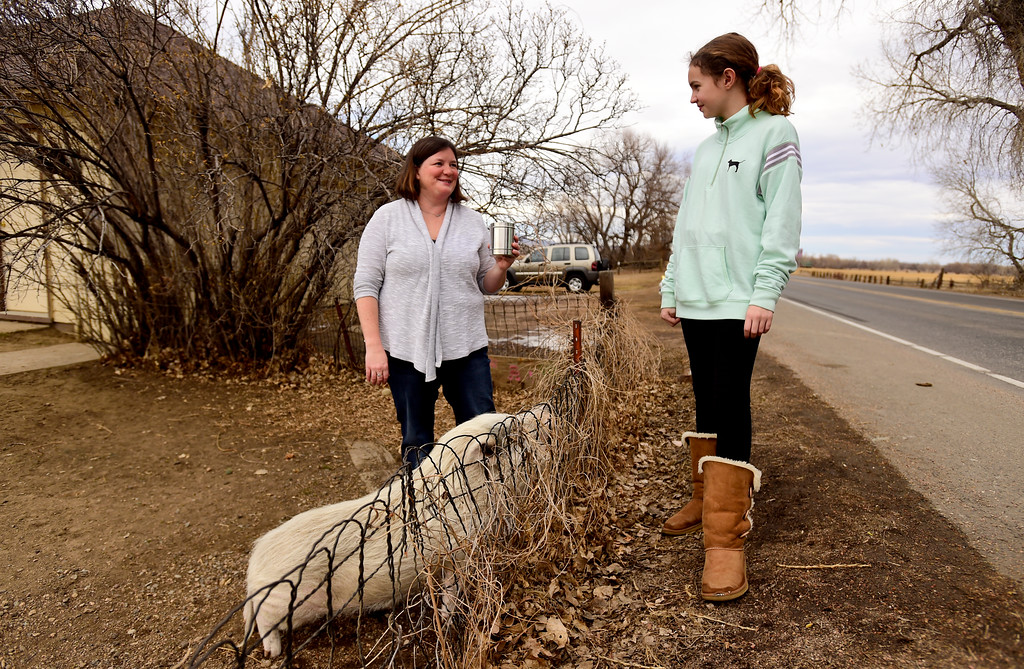 . Sedona Hicks, of Fort Collins, visits with Winston, a 7-year-old Vietnamese pot-bellied pig, as his owner Elizabeth Wright looks on in Niwot, Colorado on Jan. 30, 2018. (Photo by Matthew Jonas/Staff Photographer)