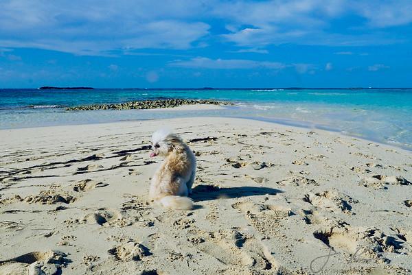 Winston- Honeymoon Cay, Bahamas