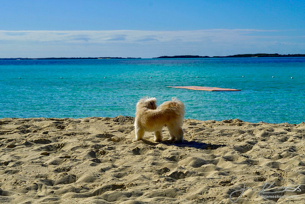 Winston on Honeymoon Cay