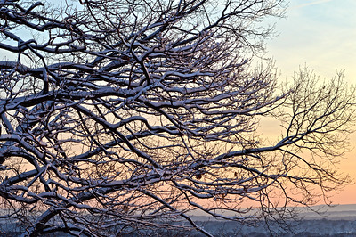 Snowtree Sunset