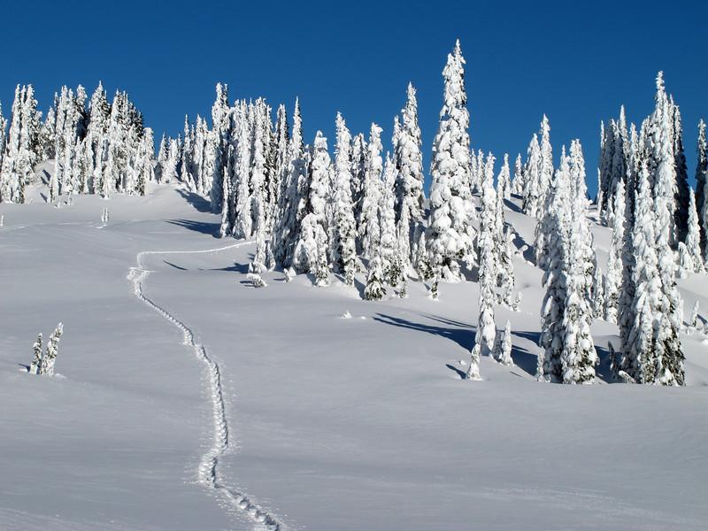 Our tracks on Mazama Ridge