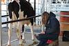 2016-UGA-Dairy-Heifer-Show (23)