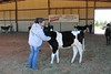 Morgan County Heifer Workshop (17)