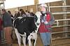 2016-UGA-Dairy-Heifer-Show (122)