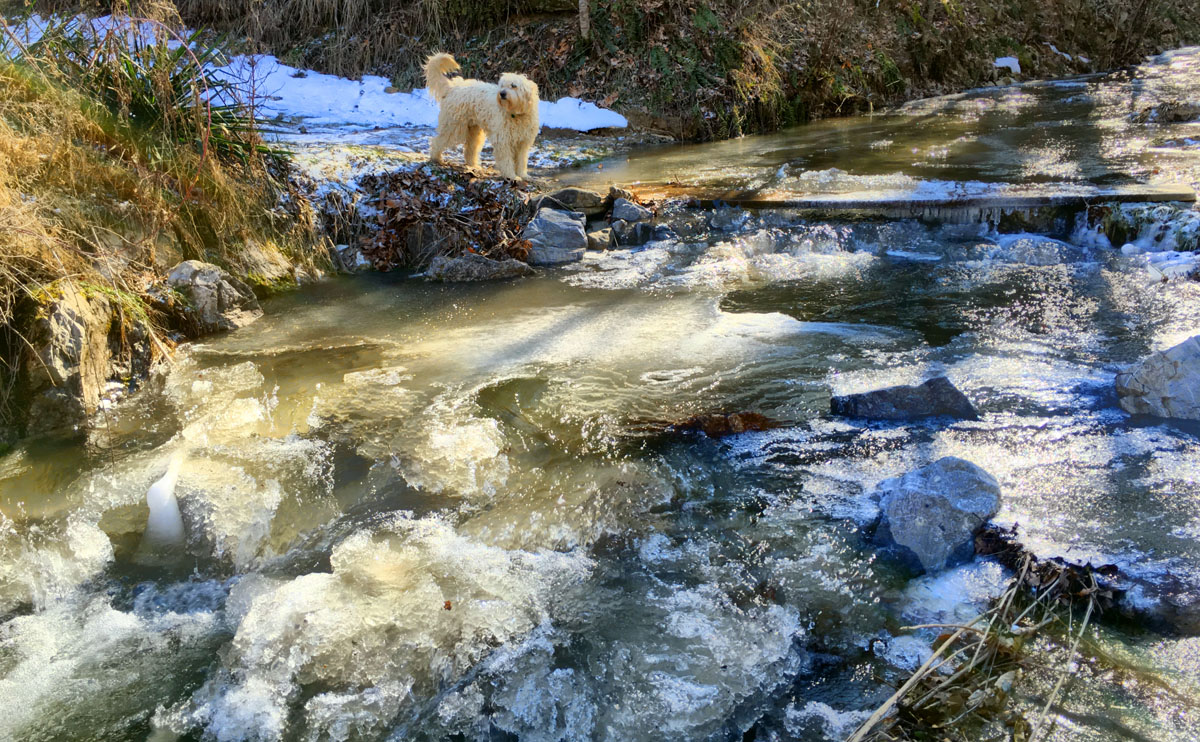 Our board bridge is solidly attached to both banks by thick ice, not going anywhere--until the thaw happens after the coming ice storm on the other side of record windchills this weekend. 2016_02_12