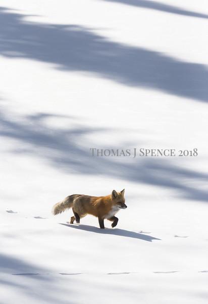 Winter - 2017 2018