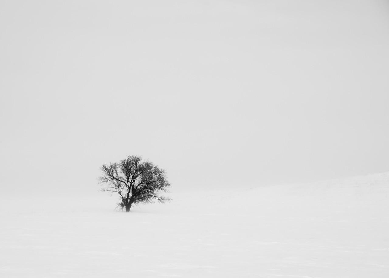 Tree in Snow 1.1