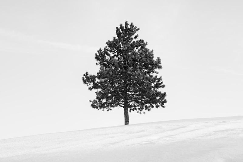 Pine Tree 4.0