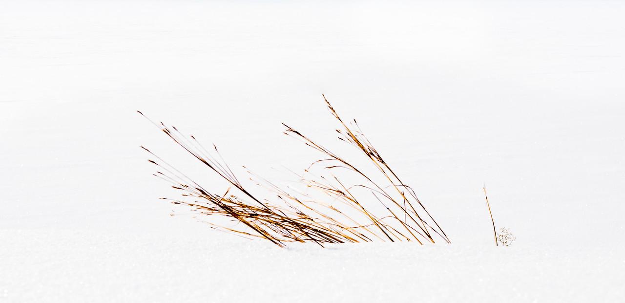 Winter Grass 1.1