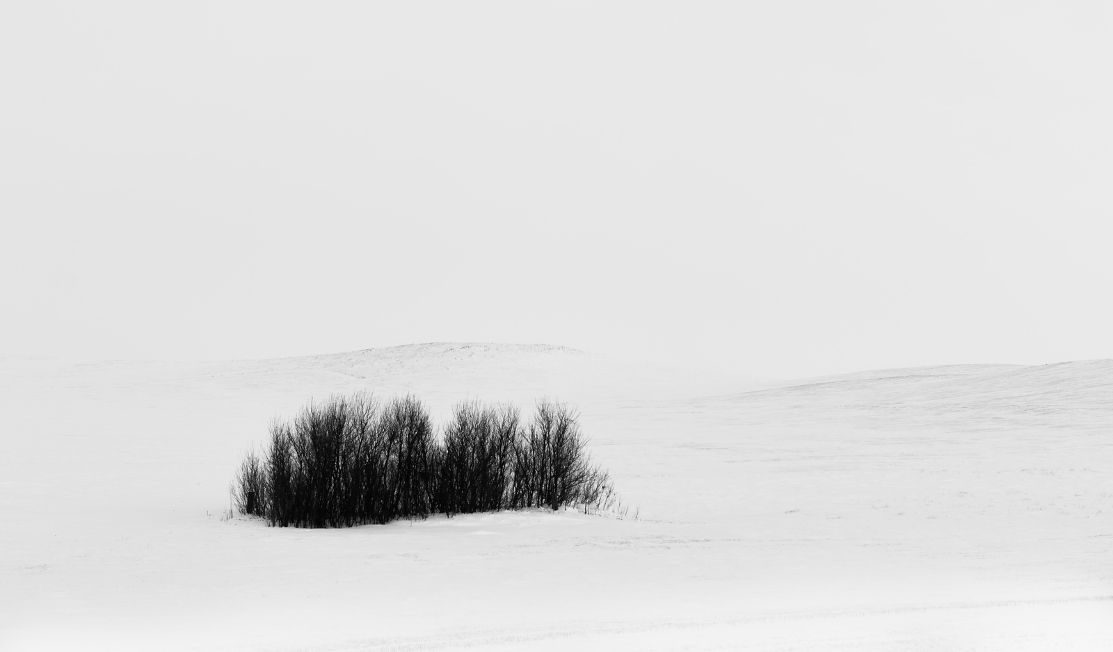 Trees in Snow 1.0