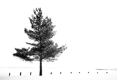 Pine Tree 1.0
