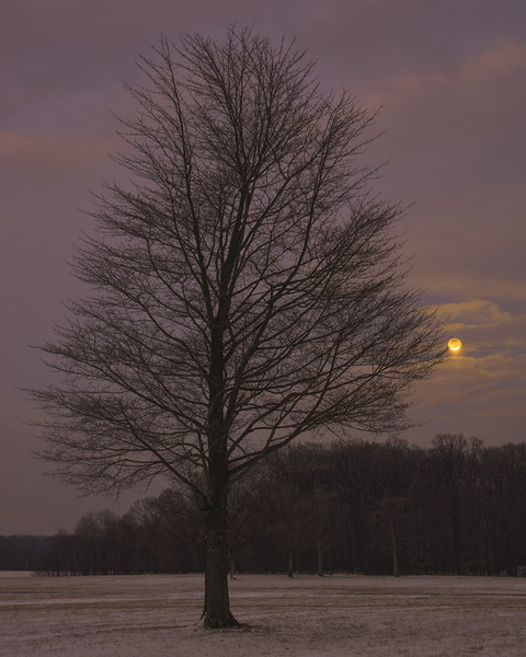 A Glimpse Of The Snow Moon