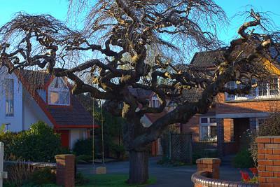 Freaky_tree.jpg