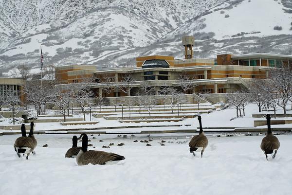 Winter Ducks - Photos by Ash