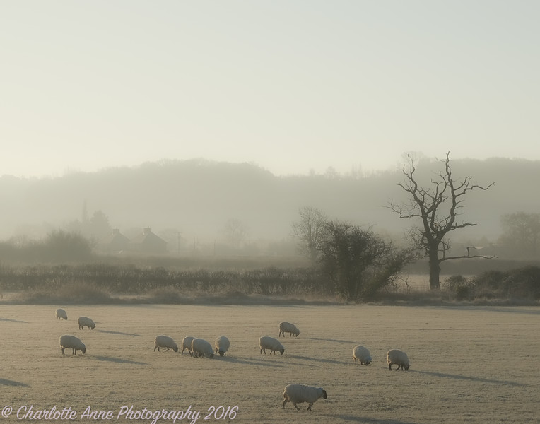 Frosty Morning Bath Landscape