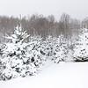 Fraser Snow