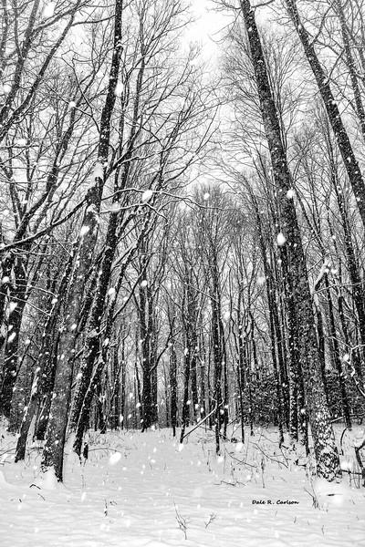 Forest Snowfall