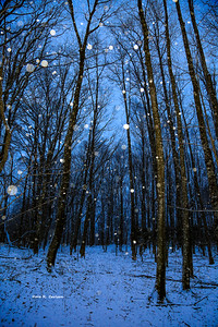 Walk in A Snowy Woods