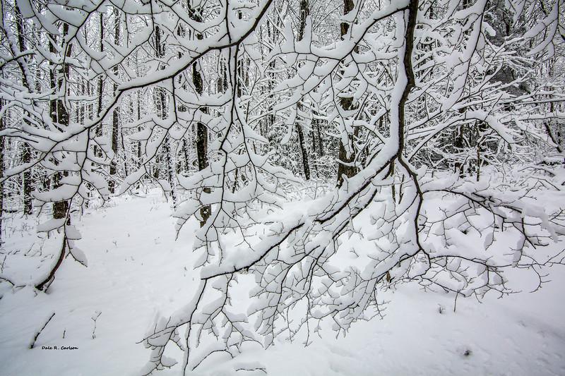 Winter Lace