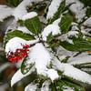 Nature's Christmas
