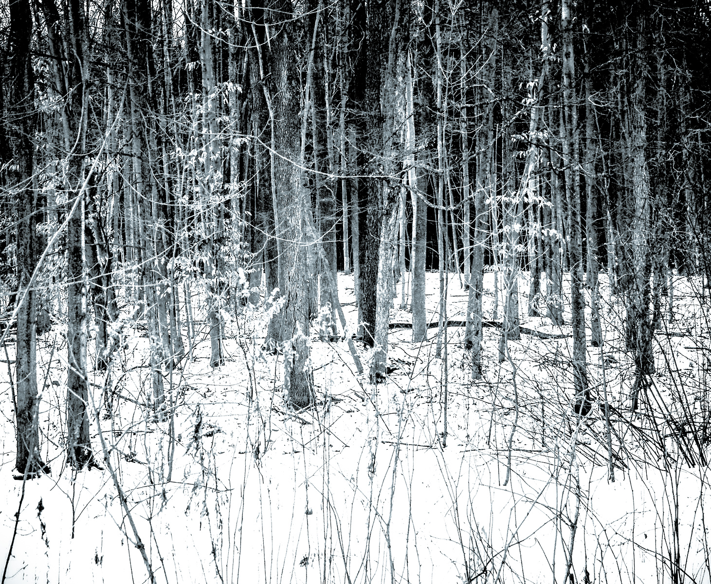 Winter woods in black and white