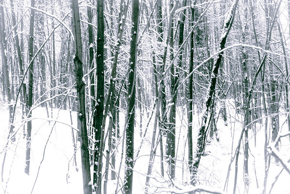 snowy woods in black and white
