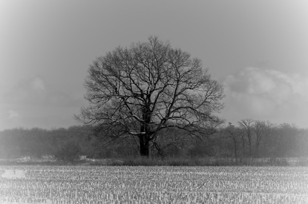 tree and sky in black and white