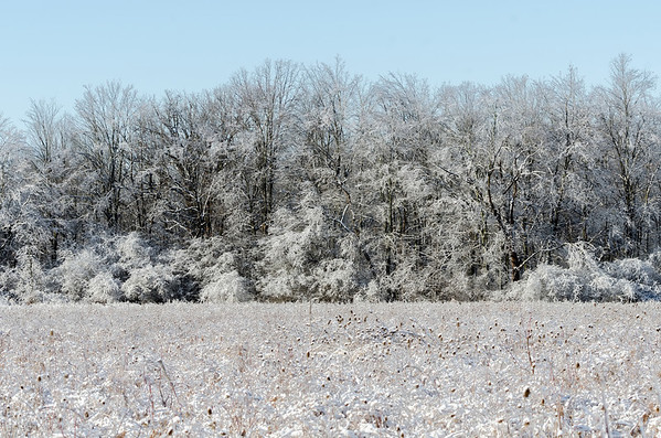 Iced forest and field