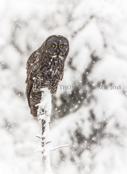 Winter Scenes 2015/2016