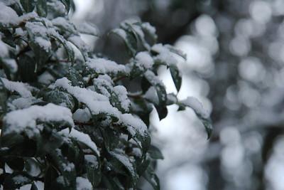 November 29, 2014 - SNOW!