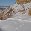 Tracks in snow at Mesa Verde NP.