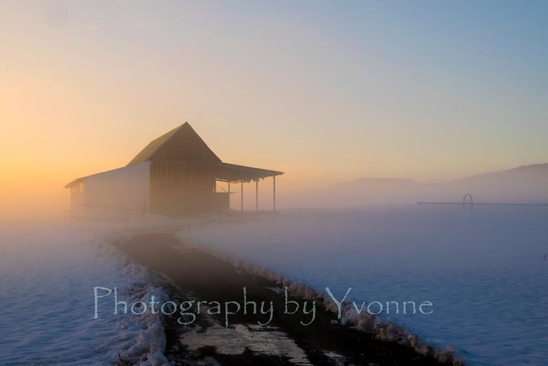 Barn at sunset in winter fog