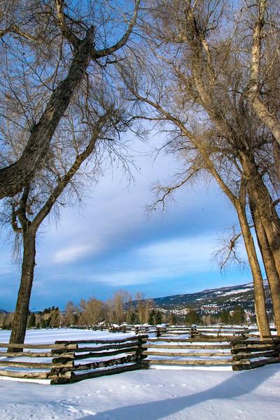 Soft winter scene