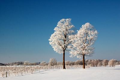 Winter Scenes
