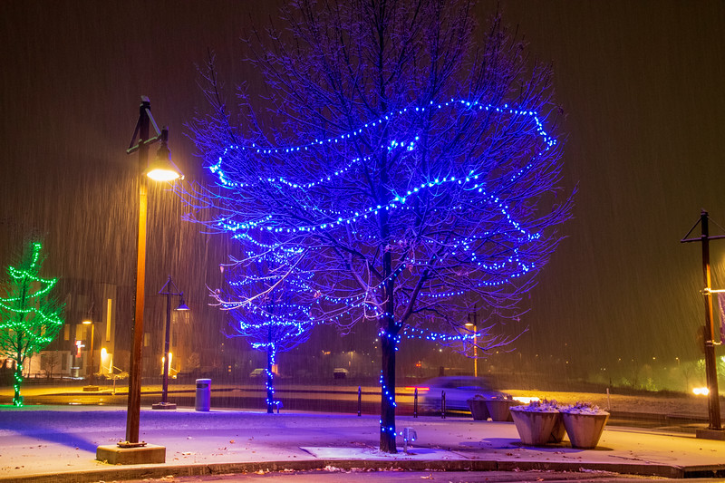 Snow in Lights