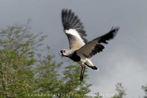 the Bird's Eye